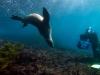 Image: Richard Vevers/Underwater Australia