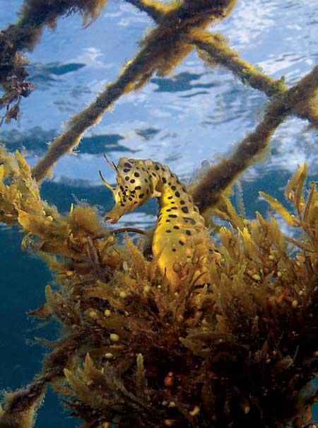 Marine Biology sydney physics