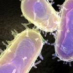 'Black Death' killer identified as bacteria