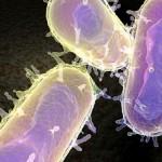 'Black Death' killer identified as bacteria