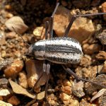 Desert beetle aids breakthrough in water collection