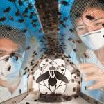Maggot factory offers hope against flesh-eating parasites