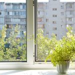 Green your home: Indoor gardens for urban dwellers