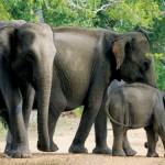 Charging elephants don't run