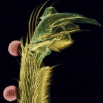 Grains of truth: Why pollen is the new hero of forensics
