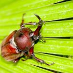 Beetle feet solve sticky problem