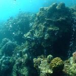 Carbon seeps predict the future for coral reefs