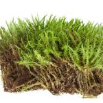 Nuclear material in Antarctic moss provides clues to climate change