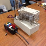 'Robosquirrel' helps scientists understand rattlesnakes