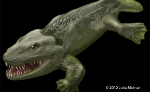 Flesh reconstruction of the whole body of Ichthyostega. Image: Julia Molner