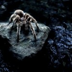 Arachnophobia cured within three hours