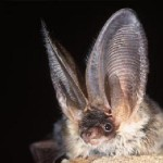 Bats are acoustically identified