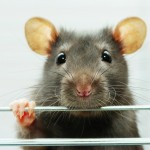 Seizure detector treats epilepsy in rats