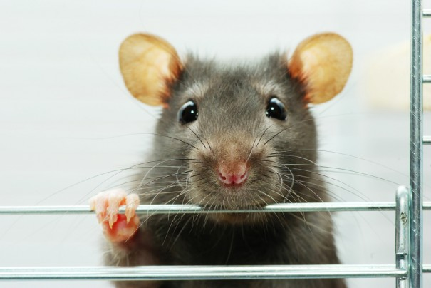 Seizure detector treats epilepsy in rats