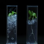 See-through soil will improve crops