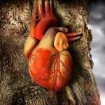 This is how a heart becomes a heart