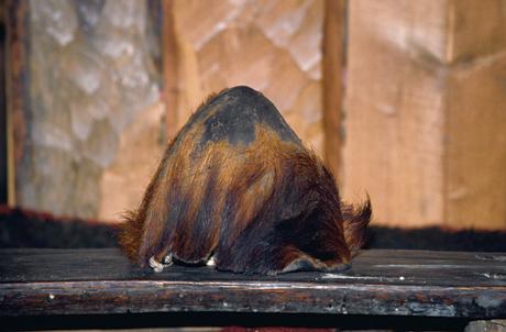 bear-scalp
