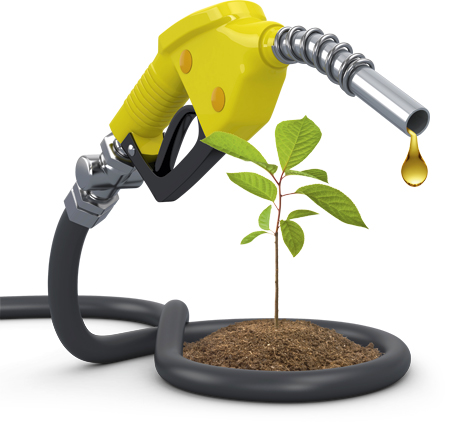 oil-plant