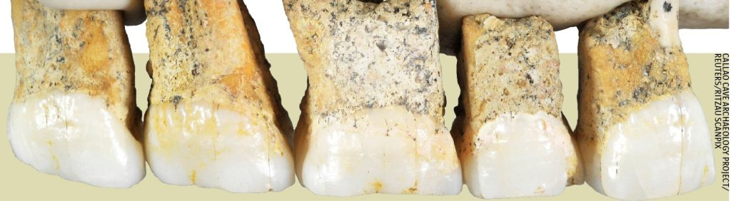 Teeth from Callao cave