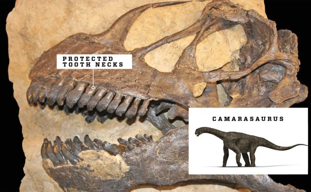 Dinobeaks